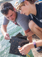 Joey Moore and Brittany Lokcu examine a plate with zebra mussels on it.